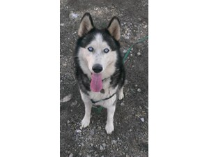 <a href='/pet-recovery/LostPetPosterOnline.aspx?lpid=39294' style='color:white; text-decoration:none;'>Raven (Siberian Husky)<br/>South San Francisco, CA</a>