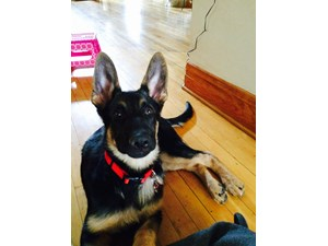 <a href='/pet-recovery/LostPetPosterOnline.aspx?lpid=39298' style='color:white; text-decoration:none;'> (German Shepherd)<br/>CHICAGO, IL</a>