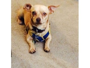 <a href='/pet-recovery/LostPetPosterOnline.aspx?lpid=39303' style='color:white; text-decoration:none;'>Pepe (Chihuahua / Mixed)<br/>Los Angeles, CA</a>