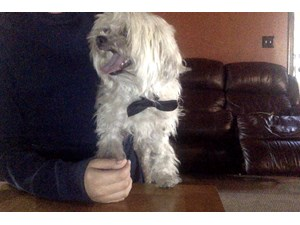 <a href='/pet-recovery/FoundPetPoster.aspx?sighting=21038' style='color:white; text-decoration:none;'>Shih Tzu (Dog)<br/>West Covina, CA</a>