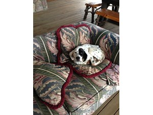 <a href='/pet-recovery/FoundPetPoster.aspx?sighting=21041' style='color:white; text-decoration:none;'>English Setter (Dog)<br/>Bristol, TN</a>