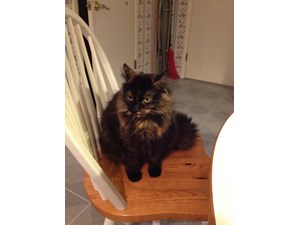 <a href='/pet-recovery/LostPetPosterOnline.aspx?lpid=39318' style='color:white; text-decoration:none;'>Gidgit (Domestic Medium Hair)<br/>renton, WA</a>