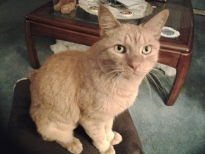 <a href='/pet-recovery/LostPetPosterOnline.aspx?lpid=39332' style='color:white; text-decoration:none;'>Max (American Shorthair)<br/>lansing, MI</a>
