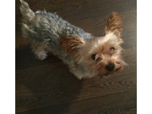 <a href='/pet-recovery/LostPetPosterOnline.aspx?lpid=39337' style='color:white; text-decoration:none;'>JB (Yorkshire Terrier)<br/>Bronx, NY</a>