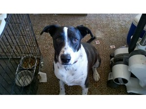 <a href='/pet-recovery/LostPetPosterOnline.aspx?lpid=39883' style='color:white; text-decoration:none;'>raskul (Mixed / Mixed)<br/>tucson, AZ</a>