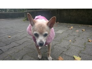 <a href='/pet-recovery/LostPetPosterOnline.aspx?lpid=39890' style='color:white; text-decoration:none;'>Penny (Chihuahua)<br/>LOS ANGELES, CA</a>