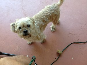 <a href='/pet-recovery/FoundPetPoster.aspx?sighting=21437' style='color:white; text-decoration:none;'>terrier (dog)<br/>North Miami Beach, FL</a>
