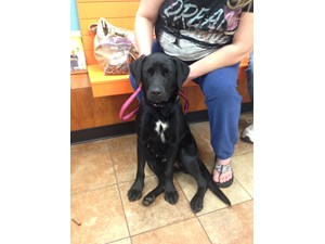 <a href='/pet-recovery/FoundPetPoster.aspx?sighting=21439' style='color:white; text-decoration:none;'>Lab (Dog)<br/>Gastonia, NC</a>