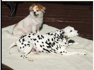 <a href='/pet-recovery/LostPetPosterOnline.aspx?lpid=39900' style='color:white; text-decoration:none;'>Dotie (Dalmatian)<br/>Antioch, CA</a>
