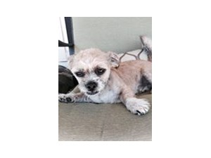 <a href='/pet-recovery/FoundPetPoster.aspx?sighting=21442' style='color:white; text-decoration:none;'>Small (Dog)<br/>Katy, TX</a>