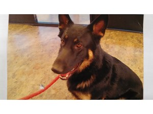 <a href='/pet-recovery/LostPetPosterOnline.aspx?lpid=39912' style='color:white; text-decoration:none;'>Meeko (German Shepherd)<br/>Fernley, NV</a>