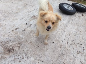<a href='/pet-recovery/FoundPetPoster.aspx?sighting=21444' style='color:white; text-decoration:none;'>Pomerainian/Mix (Dog)<br/>Round Rock, TX</a>