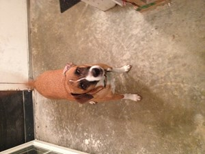 <a href='/pet-recovery/FoundPetPoster.aspx?sighting=21453' style='color:white; text-decoration:none;'> (Dog)<br/>Painesville, OH</a>