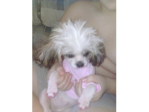 <a href='/pet-recovery/LostPetPosterOnline.aspx?lpid=39930' style='color:white; text-decoration:none;'>Neah - ne-ne (Shih Tzu)<br/>Indpls, IN</a>