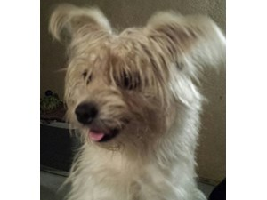 <a href='/pet-recovery/FoundPetPoster.aspx?sighting=21459' style='color:white; text-decoration:none;'>unknown (dog)<br/>fillmore, CA</a>