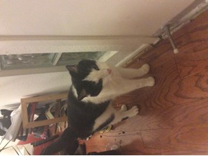 <a href='/pet-recovery/FoundPetPoster.aspx?sighting=21463' style='color:white; text-decoration:none;'> (Cat)<br/>Sherman oaks, CA</a>