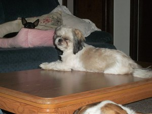 <a href='/pet-recovery/LostPetPosterOnline.aspx?lpid=39937' style='color:white; text-decoration:none;'>Penelope (Shih Tzu)<br/>Williamsport, MD</a>