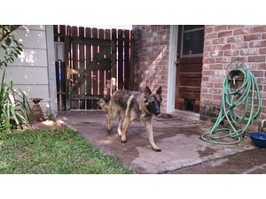 <a href='/pet-recovery/LostPetPosterOnline.aspx?lpid=39944' style='color:white; text-decoration:none;'>Jacob (German Shepherd)<br/>Houston, TX</a>