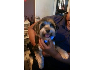 <a href='/pet-recovery/LostPetPosterOnline.aspx?lpid=39946' style='color:white; text-decoration:none;'>Benjie (Yorkshire Terrier)<br/>Marmir, FL</a>