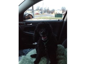 <a href='/pet-recovery/LostPetPosterOnline.aspx?lpid=39961' style='color:white; text-decoration:none;'>bella (Cocker Spaniel)<br/>prophetstown, IL</a>