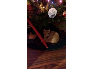 <a href='/pet-recovery/LostPetPosterOnline.aspx?lpid=39965' style='color:white; text-decoration:none;'>Ke Kat (Domestic Short Hair)<br/>Redding, CT</a>