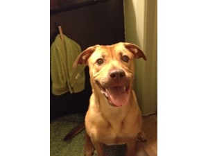 <a href='/pet-recovery/LostPetPosterOnline.aspx?lpid=39969' style='color:white; text-decoration:none;'>Lucy (Mastiff Mix)<br/>Alvin, TX</a>