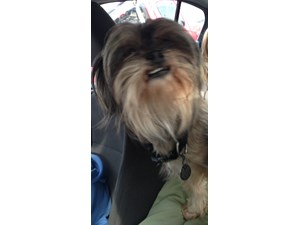 <a href='/pet-recovery/FoundPetPoster.aspx?sighting=21492' style='color:white; text-decoration:none;'>shih tzu (Dog)<br/>Brentwood, TN</a>