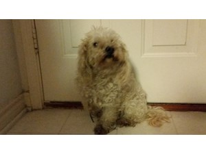 <a href='/pet-recovery/FoundPetPoster.aspx?sighting=21506' style='color:white; text-decoration:none;'> (dog)<br/>Allen, TX</a>