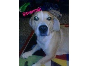 <a href='/pet-recovery/LostPetPosterOnline.aspx?lpid=40005' style='color:white; text-decoration:none;'>Savannah (Basset Hound)<br/>Plainfield, IN</a>