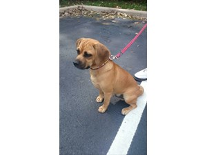 <a href='/pet-recovery/LostPetPosterOnline.aspx?lpid=40016' style='color:white; text-decoration:none;'>Nibbles (Puggle)<br/>Kenosha, WI</a>