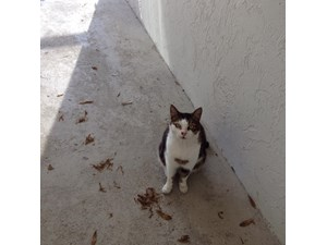<a href='/pet-recovery/FoundPetPoster.aspx?sighting=22109' style='color:white; text-decoration:none;'>domestic shorthair (cat)<br/>Venice, FL</a>