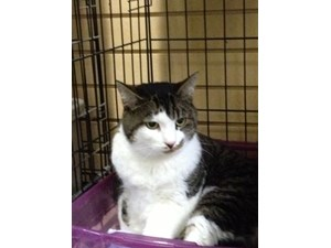<a href='/pet-recovery/FoundPetPoster.aspx?sighting=22120' style='color:white; text-decoration:none;'> (cat)<br/>Melbourne, FL</a>