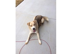 <a href='/pet-recovery/FoundPetPoster.aspx?sighting=22130' style='color:white; text-decoration:none;'>Lab/Shephard Mix? (Dog)<br/>Concord, NC</a>