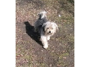<a href='/pet-recovery/FoundPetPoster.aspx?sighting=22153' style='color:white; text-decoration:none;'>Yorkie/Shih Tzu mix (dog)<br/>Garland, TX</a>