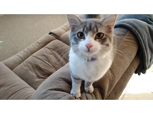 <a href='/pet-recovery/FoundPetPoster.aspx?sighting=22157' style='color:white; text-decoration:none;'> (Cat)<br/>Phoenix, AZ</a>