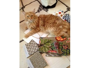 <a href='/pet-recovery/LostPetPosterOnline.aspx?lpid=41324' style='color:white; text-decoration:none;'>Sheldon (Maine Coon)<br/>Mill Valley, CA</a>