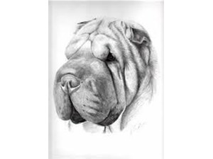 <a href='/pet-recovery/LostPetPosterOnline.aspx?lpid=41331' style='color:white; text-decoration:none;'>lola (Shar Pei)<br/>finlay, OH</a>