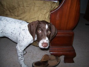 <a href='/pet-recovery/LostPetPosterOnline.aspx?lpid=41337' style='color:white; text-decoration:none;'>Tilly (German Shorthair Pointer)<br/>Peoria, AZ</a>