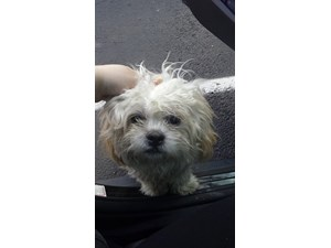 <a href='/pet-recovery/FoundPetPoster.aspx?sighting=22174' style='color:white; text-decoration:none;'>Shih Tzu/Lahsa Apso (Dog)<br/>Dallas, TX</a>