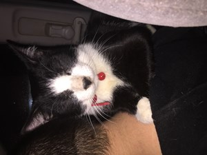 <a href='/pet-recovery/FoundPetPoster.aspx?sighting=22183' style='color:white; text-decoration:none;'>Not sure (Cat)<br/>York, PA</a>