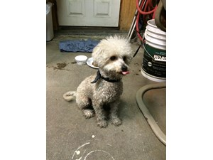 <a href='/pet-recovery/FoundPetPoster.aspx?sighting=22191' style='color:white; text-decoration:none;'> (dog)<br/>Pacoima, CA</a>