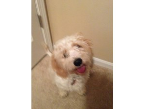 <a href='/pet-recovery/LostPetPosterOnline.aspx?lpid=41403' style='color:white; text-decoration:none;'>Max (Cavachon)<br/>Lansing, KS</a>