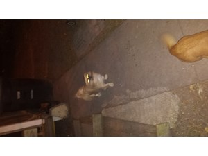 <a href='/pet-recovery/FoundPetPoster.aspx?sighting=22201' style='color:white; text-decoration:none;'> (dog)<br/>Corpus Christi, TX</a>