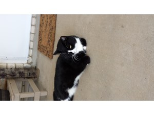 <a href='/pet-recovery/FoundPetPoster.aspx?sighting=22215' style='color:white; text-decoration:none;'> (cat)<br/>Dripping Springs, TX</a>