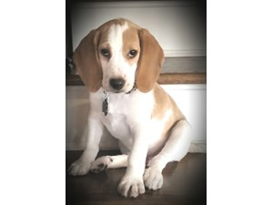 <a href='/pet-recovery/LostPetPosterOnline.aspx?lpid=41430' style='color:white; text-decoration:none;'>Riley (Beagle)<br/>Sevierville, TN</a>
