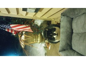 <a href='/pet-recovery/FoundPetPoster.aspx?sighting=22234' style='color:white; text-decoration:none;'>tuxedo (cat)<br/>bartlett, IL</a>