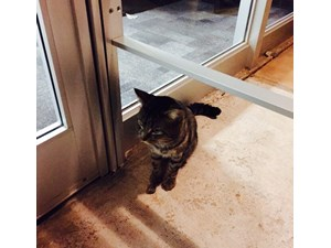 <a href='/pet-recovery/FoundPetPoster.aspx?sighting=22238' style='color:white; text-decoration:none;'>Tabby (Cat)<br/>Edmond, OK</a>