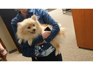 <a href='/pet-recovery/FoundPetPoster.aspx?sighting=22239' style='color:white; text-decoration:none;'>Pomeranian (Dog)<br/>Nashville, TN</a>