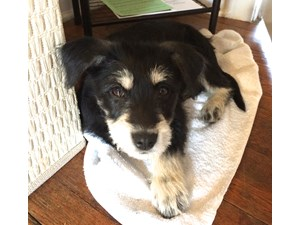 <a href='/pet-recovery/FoundPetPoster.aspx?sighting=22243' style='color:white; text-decoration:none;'>Mutt - Terrier Mix (Small Puppy)<br/>Athens, GA</a>