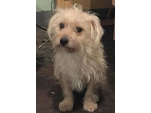 <a href='/pet-recovery/FoundPetPoster.aspx?sighting=22249' style='color:white; text-decoration:none;'>TERRIER (DOG)<br/>staten island, NY</a>
